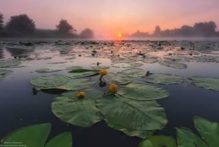 morning, river, lilies, Sunrise, photographer, Андрей Олонцев