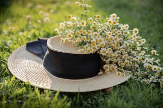 hat, grass, chamomile