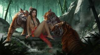 jungle, tigers, Lovers, predators