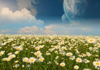 field, chamomile, planet, fantasy