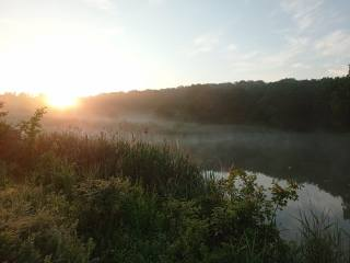 summer, sunrise, the sun, fog, the lake, beautiful