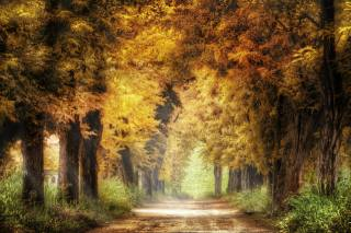 road, forest, autumn