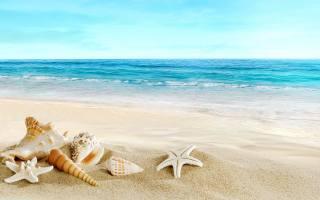 sea, shells, разной, form, sand, sea, the beach, summer, hd, Wallpaper