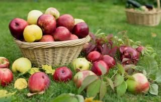 grass, basket, apples, harvest