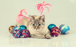 grey, cat, with, красивыми, разноцветными, новогодними, шариками