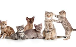 funny, small, kittens, on, white, background