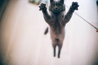 cat, jump, paws, eyes