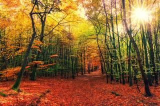 forest, landscape, autumn