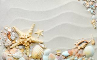 a lot, ракушек, sand, the beach, shells, sea, stars, shells, hd, Wallpaper