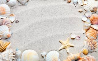 white, sand, the beach, shells, sea, stars, line, on, the sand