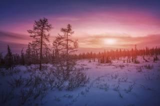 winter landscape, photo, Николай Шевченко