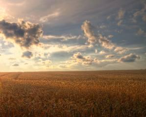 landscape, field, harvest, the sky