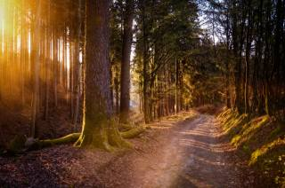 Forest, road, moss, trees, nature