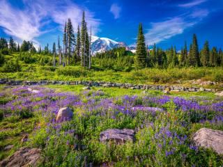mountains, Lupin, stones, Mount Rainier, National Park, Washington, trees, nature