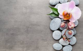 Orchid, TOP, stones, twig