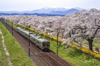 гори, сакура, залізниця, поїзд