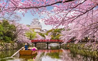 весна, Японія, вода, дерева, сакури, туризм, водний, шлях