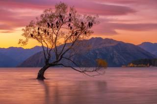 озеро, дерево, птахи, нова зеландія, Композиція