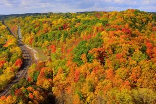 ліс, осінь, фарби, залізниця