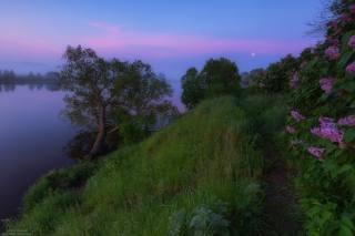 лето, пейзаж, красиво, сирень, речка, фото, Андрей Олонцев