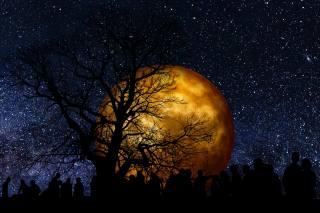 луна, звёзды, дерево, люди