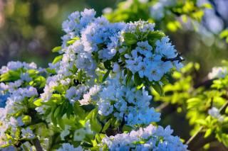 квіти, гілка, листя