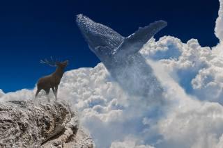 clouds, mountain, Keith, deer