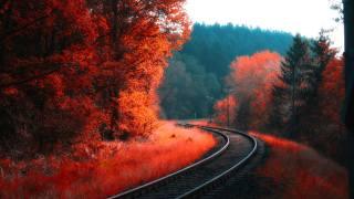 залізниця, рейки, природа, осінь