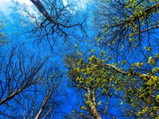 небо, дерева, весна