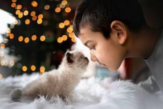 хлопчик, кошеня, друзі