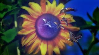 соняшник, космос, зірки, чайки, листя, фотоманіпуляція