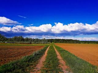 поле, небо, хмари