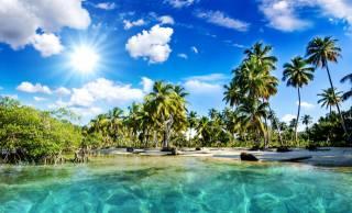 the beach, nature, palm trees, sea