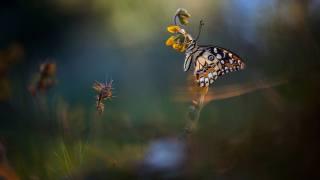 природа, літо, квіти, стебла, метелик, комаха, макро