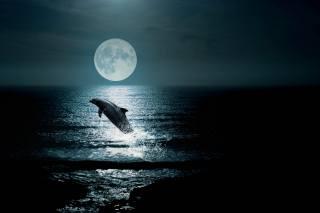 ніч, місяць, океан, дельфін, стрибок, фотоманіпуляція