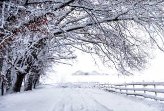 zima, sníh, plot