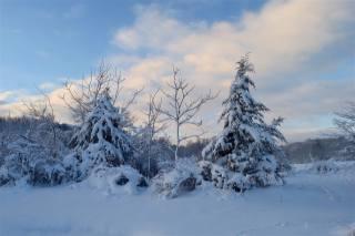 příroda, krajina, zima, sníh, stromy, jedli, les