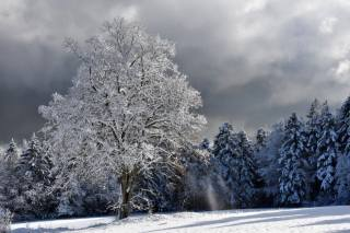 příroda, zima, stromy, jedli, les, strom, jinovatka, sníh