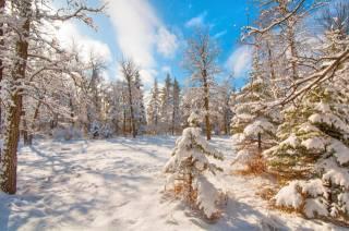 příroda, krajina, zima, sníh, stromy, nebe, mraky
