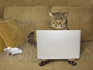фото, креатив, кіт