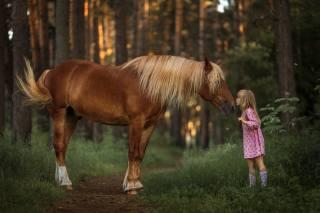 dítě, dívka, Zvíře, kůň, příroda, les, stezka