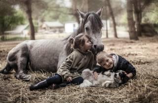 děti, dívka, chlapec, zvířata, pes, pes, kůň, kůň, seno