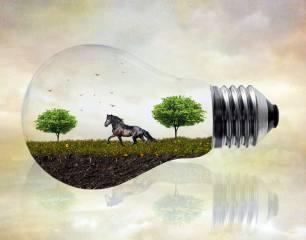 кінь, луг, дерева, птахи, лампочка, фотоманіпуляція