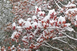 sníh, větvičky, listy, barvy, Složení, zima