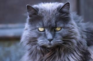 кіт, стилизация, живопис