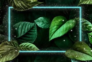 листя, рамка, фон