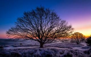 příroda, nebe, rheden, západ slunce, nizozemsko, zima, Guelders, stromy, jinovatka