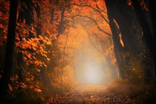 Алея, дерева, листя, руда, осінь