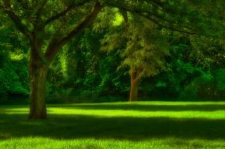 поляна, трава, деревья, солнце
