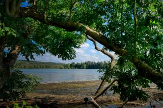 небо, річка, берег, дерева